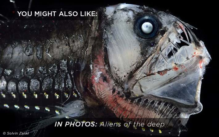 aliens-of-the-deep_related_31_05_17.jpg