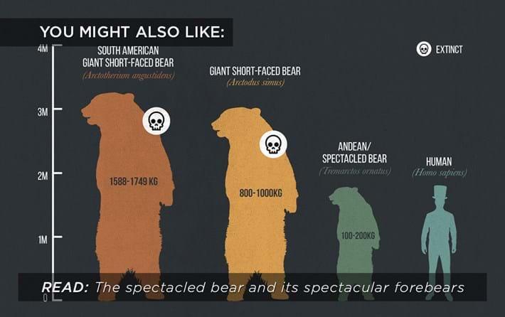 spectacled-bear_related_01_06_17.jpg
