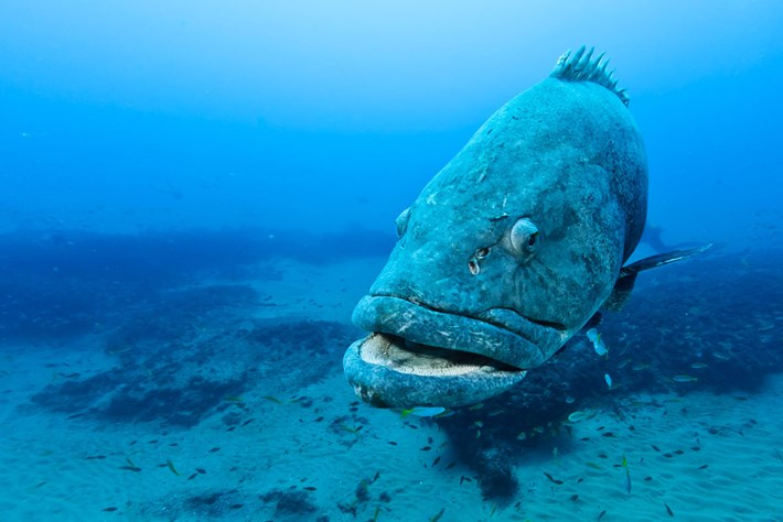 potato_bass_oceans_day_2017-06-08.jpg