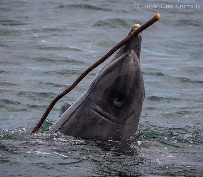 dolphin-5-2017-5-13.jpg