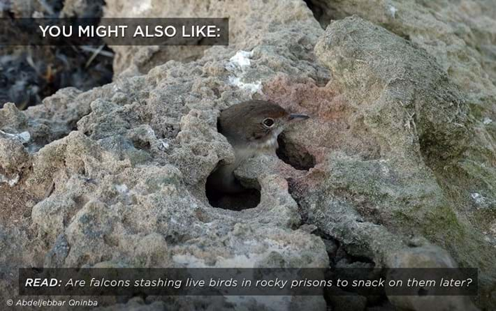 falcon-prison-snack_related_19_06_17.jpg