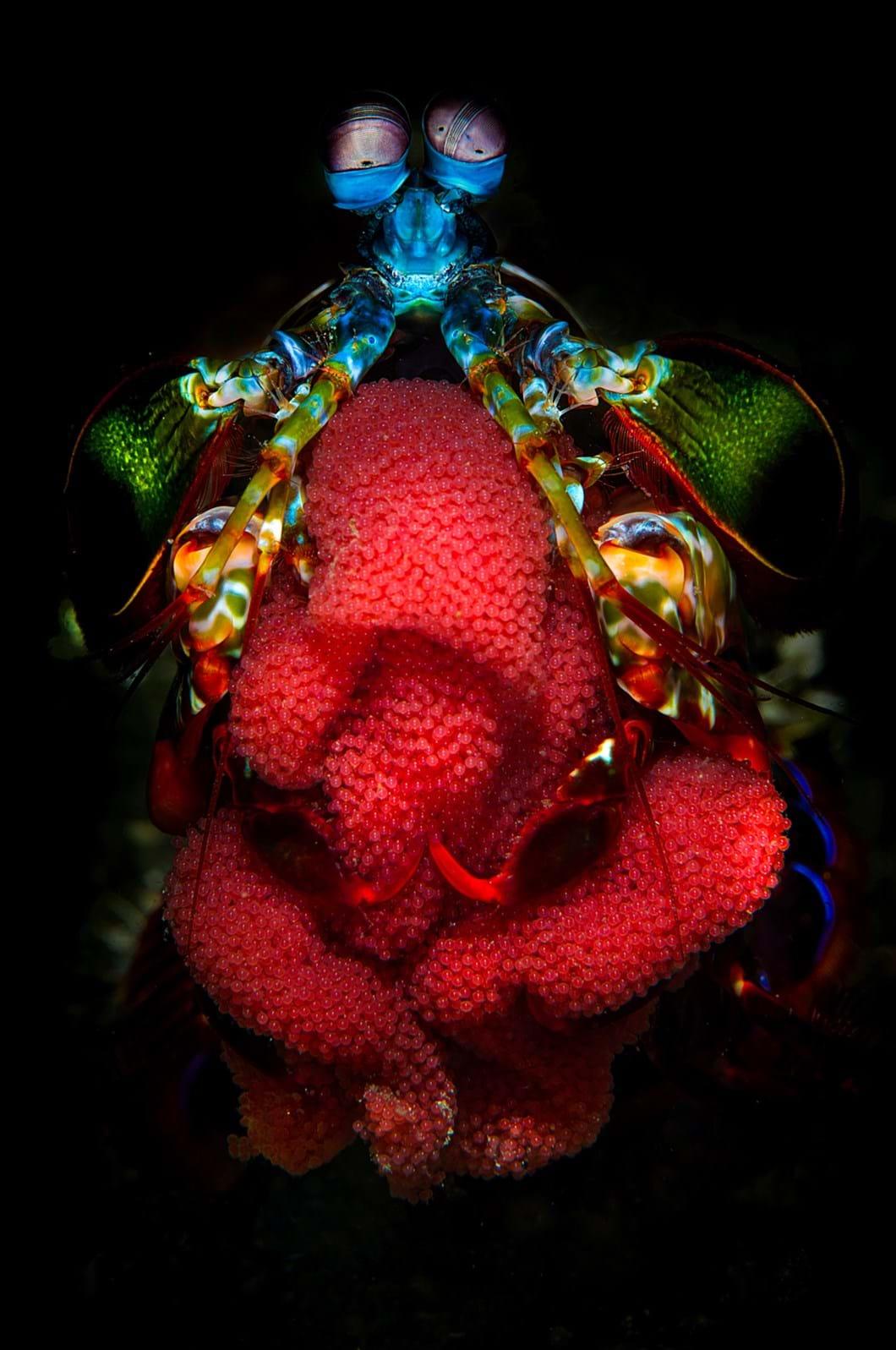 cal-mantis-2017-5-26.jpg.jpg