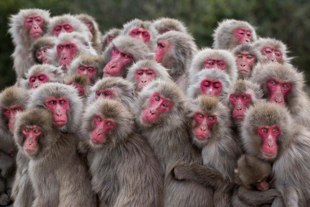 cal-monkey-2017-5-26.jpg.jpg