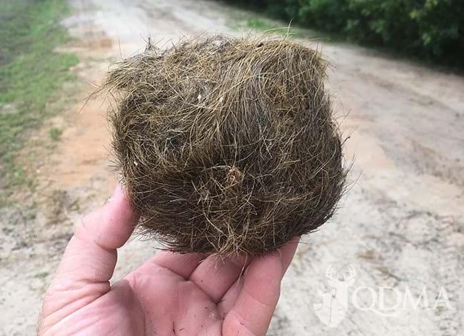 hairball1_2017_07_12.jpg