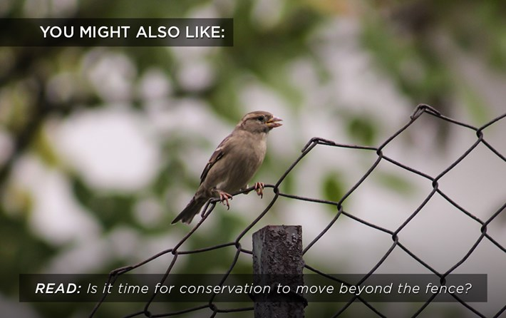 conservation_fence_related_19_07_17.jpg