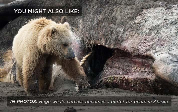 bear-whale-buffet_related_20_07_17.jpg