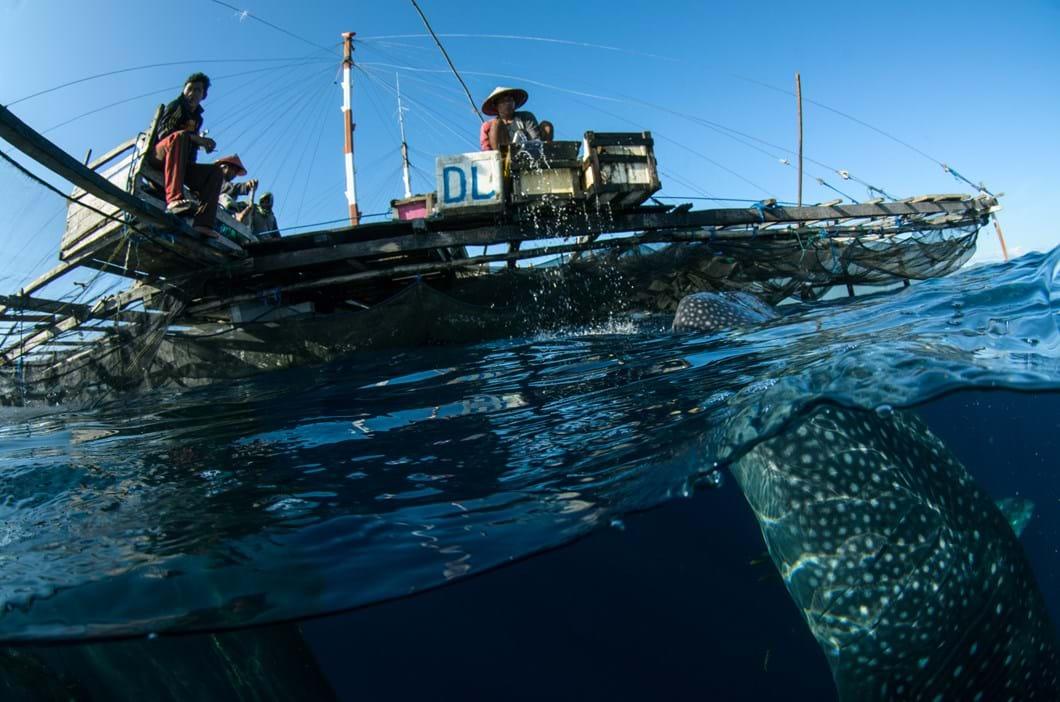 whale shark boat_2017_07_25.jpg