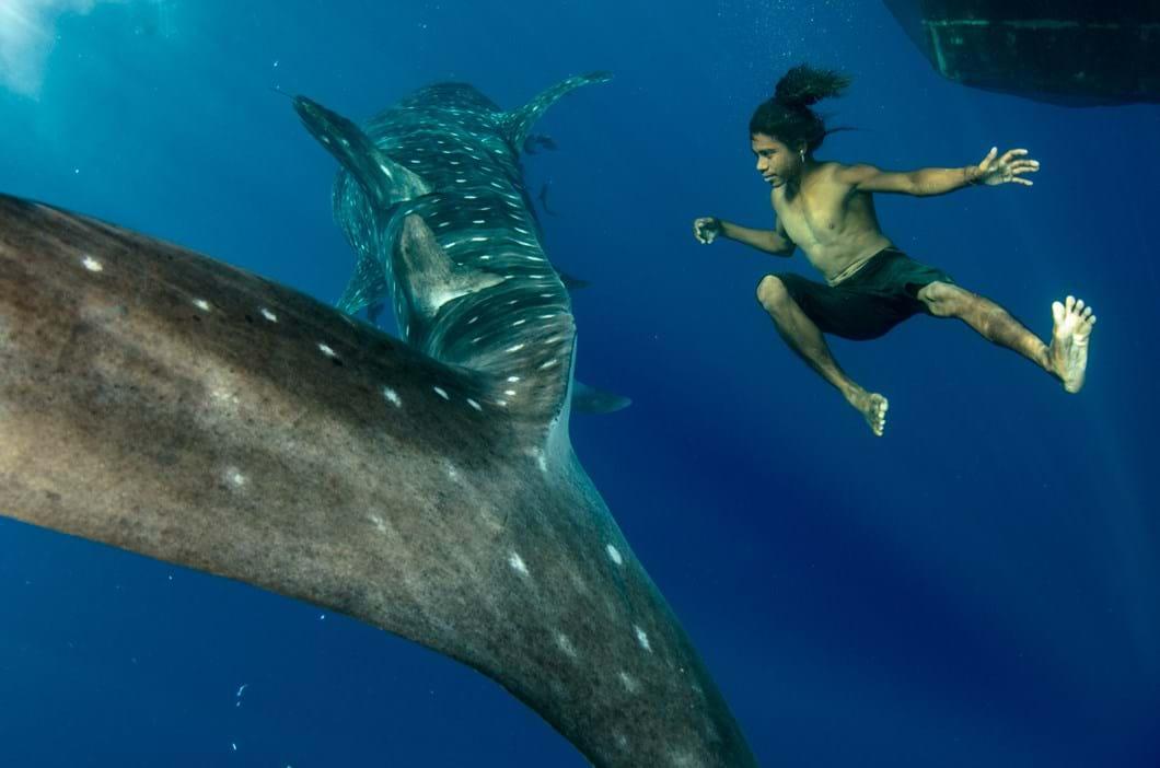whale shark_child_2017_07_25.jpg