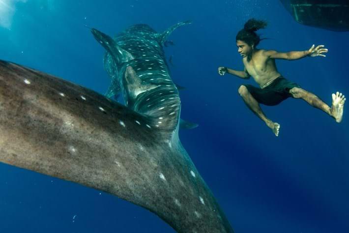 whale-shark-thumb_2017_07_26.jpg