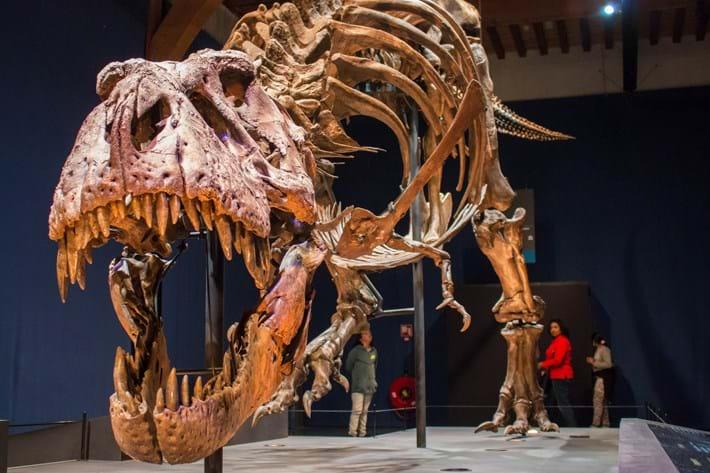 T rex skeleton_2017_07_26.jpg