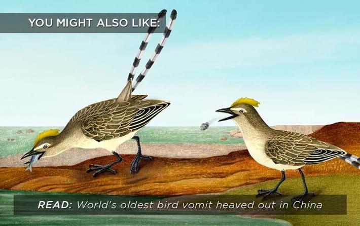 oldest-bird-vomit_related_31_07_17.jpg