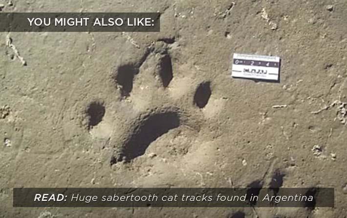 sabertooth-tracks_related_17_08_01.jpg