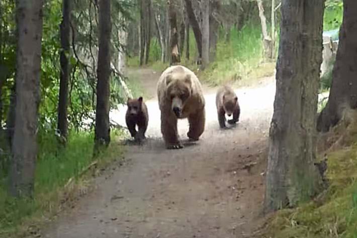 grizzly-encounter-thumb_2017_08_01.jpg
