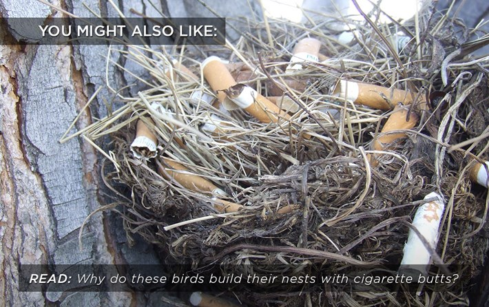 birds_cigarettes_related_02_08_17.jpg