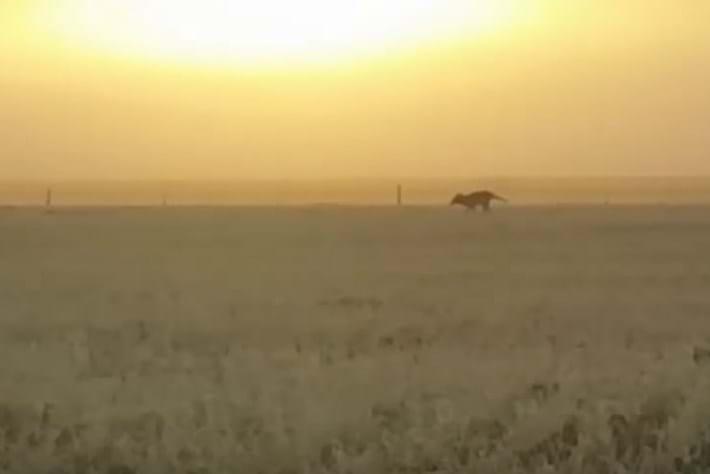 thylacine_screenshot_2017-08-10.jpg