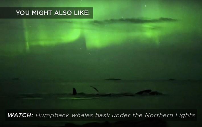 humpbacks_northern_lights_related_2017-09-17.jpg
