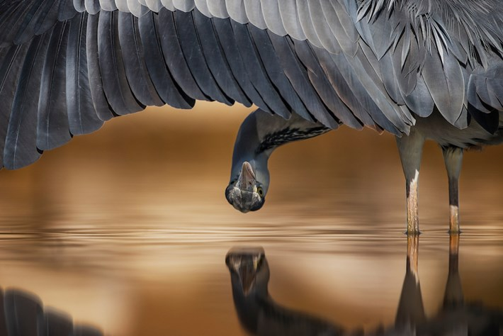 birds-3-2017-8-23.jpg.jpg