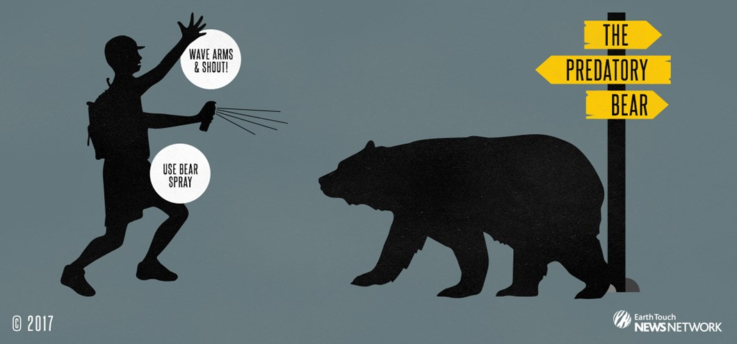 The-Predatory-Bear_graphic_2017_08_25.jpg (1)
