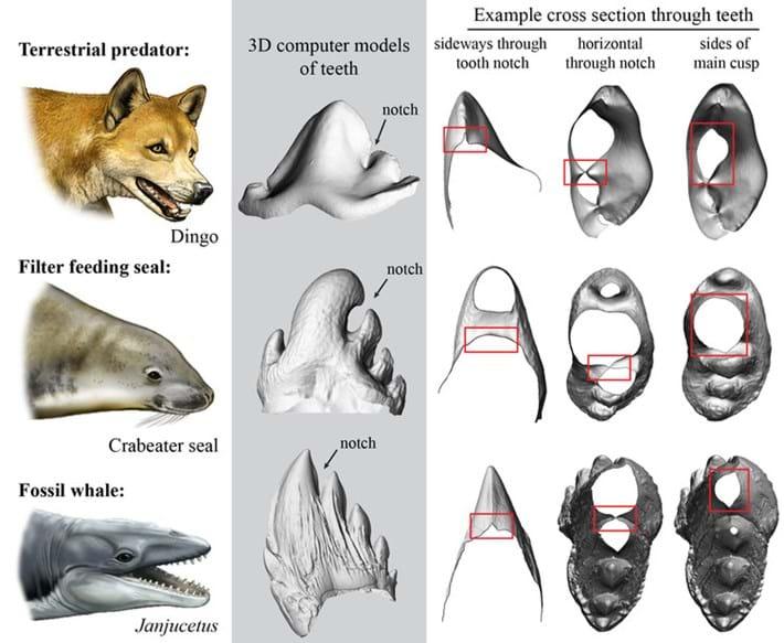 3D computer models of teeth_2017_08_30.jpg