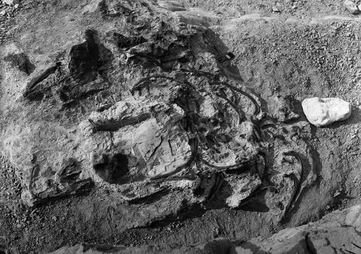 Upside_Down_Ankylosaur_2017_08_31.jpg (1)