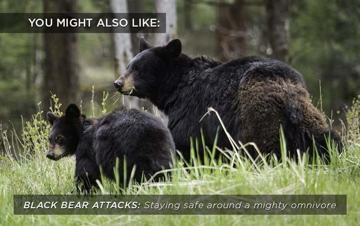 black-bear-attacks_related_05_09_17.jpg