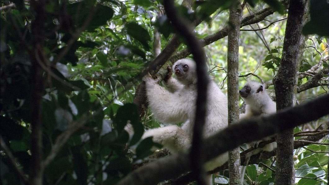 lemur_baby_2017_09_06.jpg
