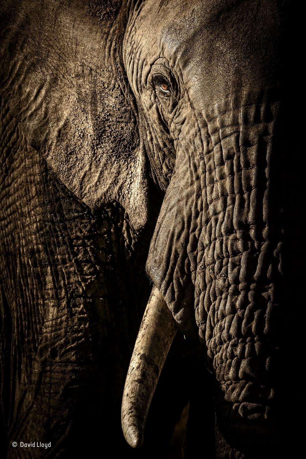 The power of the matriarch_David Lloyd_Wildlife Photographer of the Year_2017_09_11.jpg