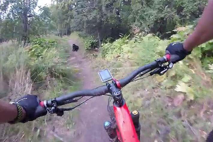black_bear_cyclist_2017-09-14.jpg