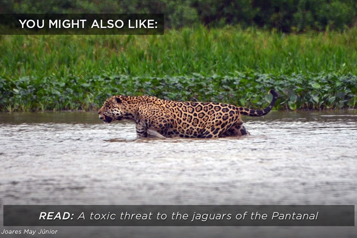 jaguars-toxic-threat_related_15_09_17.jpg