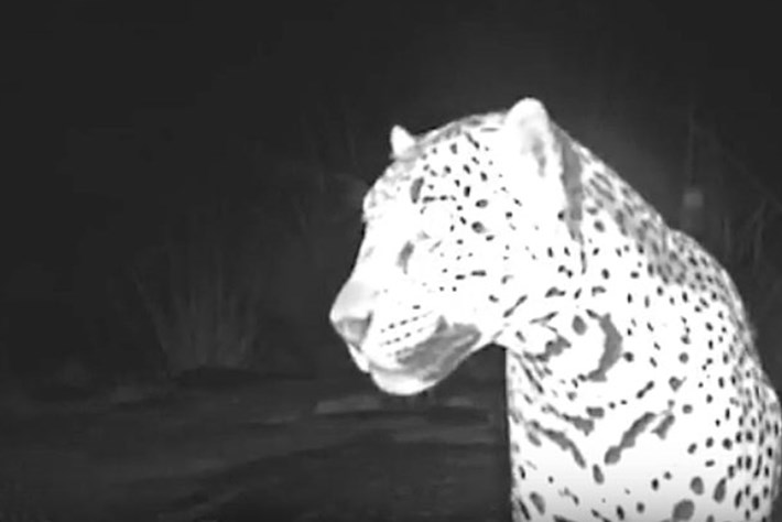jaguar-sombra_2017_09_15.jpg