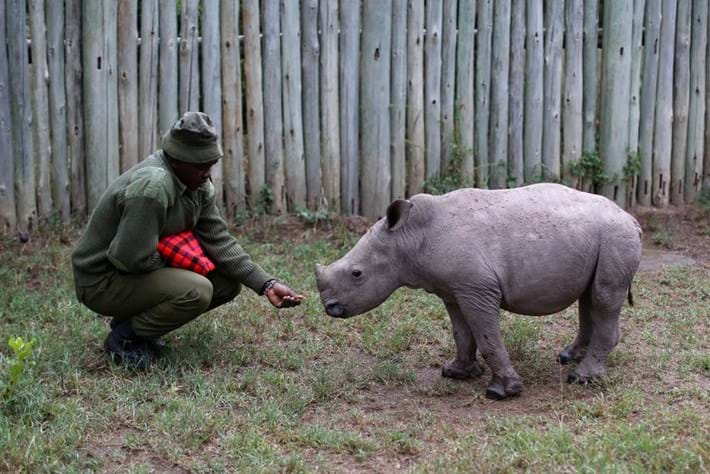 rhino_with_ranger_2017-09-22.jpg