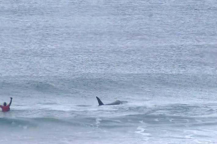 orcas-surf-2017-11-24.jpg