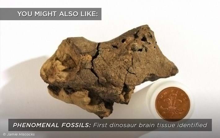 dinosaur-brain-tissue_related_29_09_17.jpg