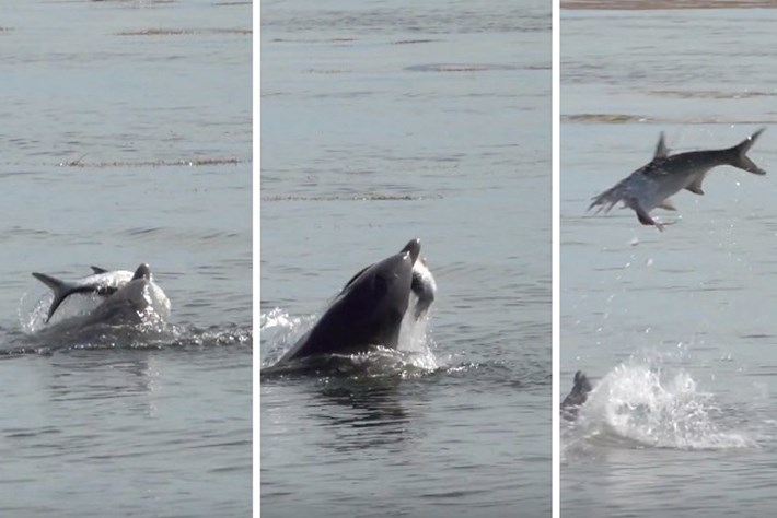dolphin-header-2017-10-1.jpg