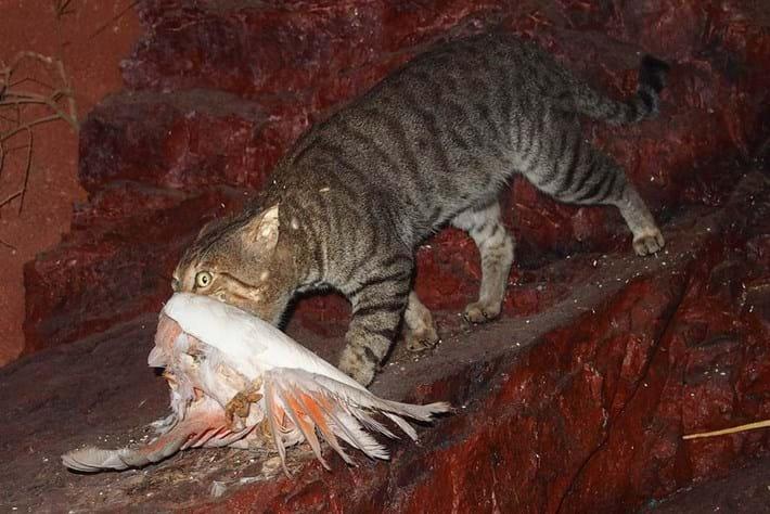 New study: Cats kill more than a million Australian birds every day