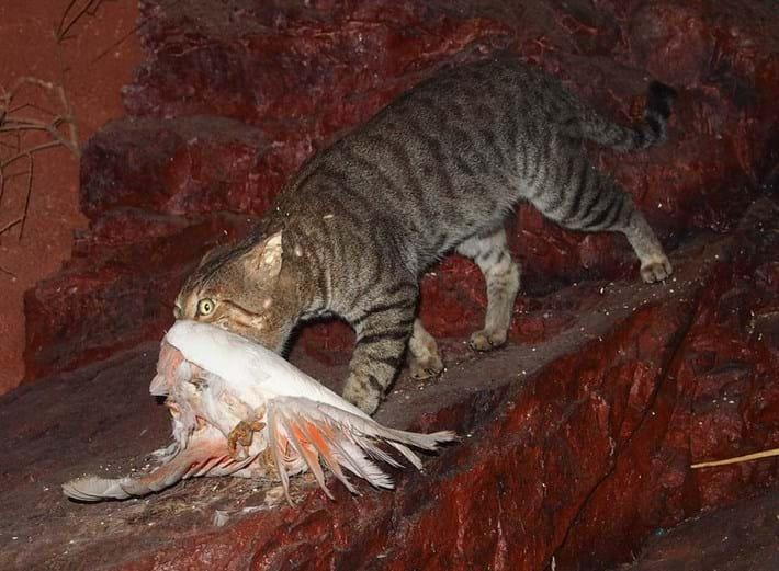 feral cat with bird_2017_10_04.jpg
