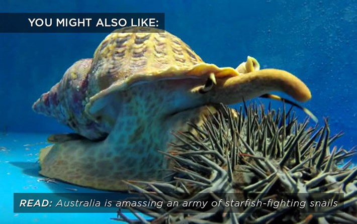 starfish-fighting-snails_related_04_10_17-1.jpg