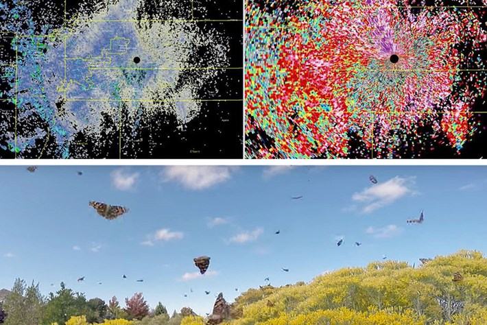70 mile-wide swarm of butterflies picked up by weather radar in Colorado