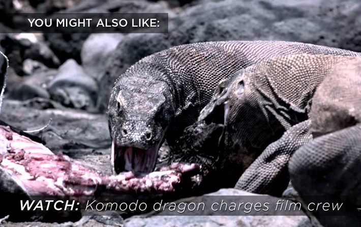 komodo_dragon_related_2017-10-18.jpg