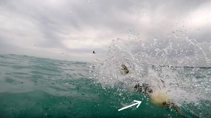 shark-bait1-2017-10-24.jpg