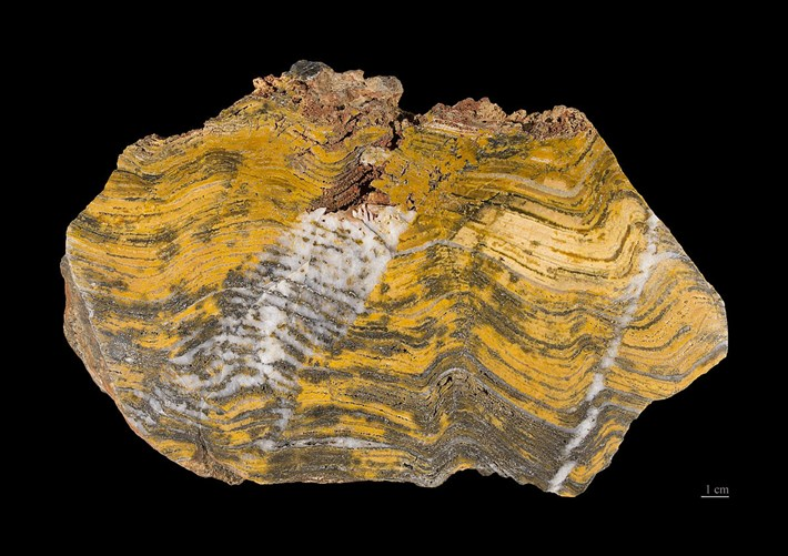 2017_11_17_Stromatolite_Fossil.jpg