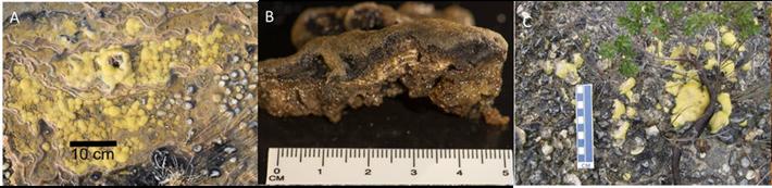 2017_11_17_Stromatolites_Tasmania.png