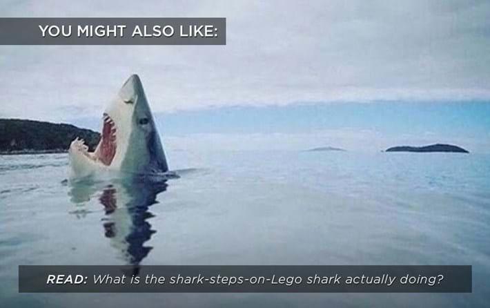 shark-steps-lego_related_29_11_17.jpg