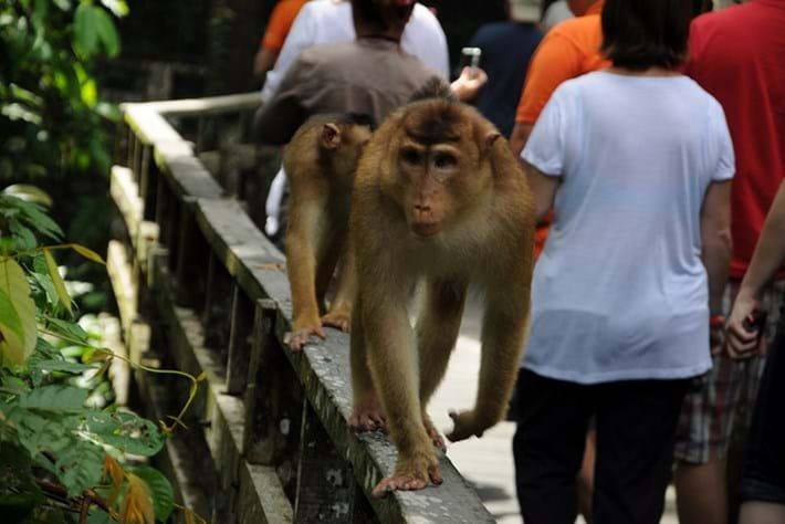humans primates_2017_12_11.jpg