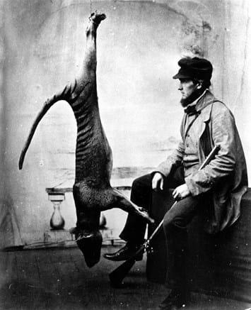 thylacine_hunter_2017_12_12.jpg