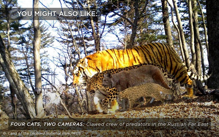 four-cats_two-cameras_related_18_12_17.jpg