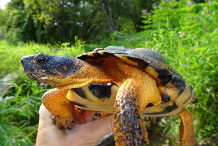 The illegal turtle trade: Why some scientists keep secrets