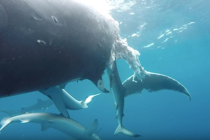 whale-page-208-1-12.jpg