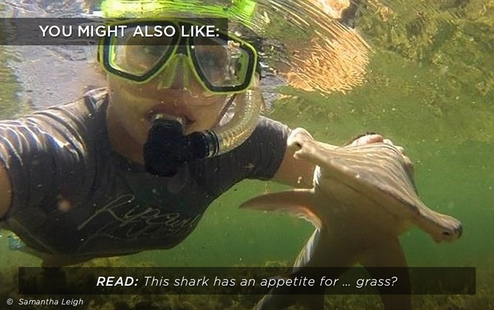 grass-shark_related_22_01_18.jpg