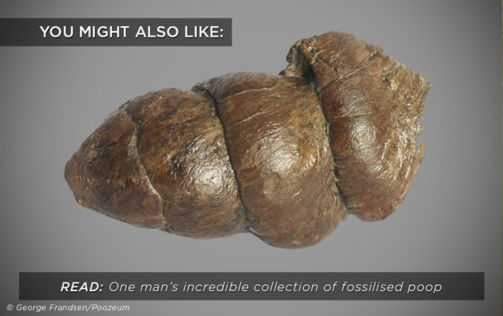 fossilised-poop-collection_related_22_01_18.jpg